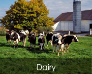Dairy Feed Products