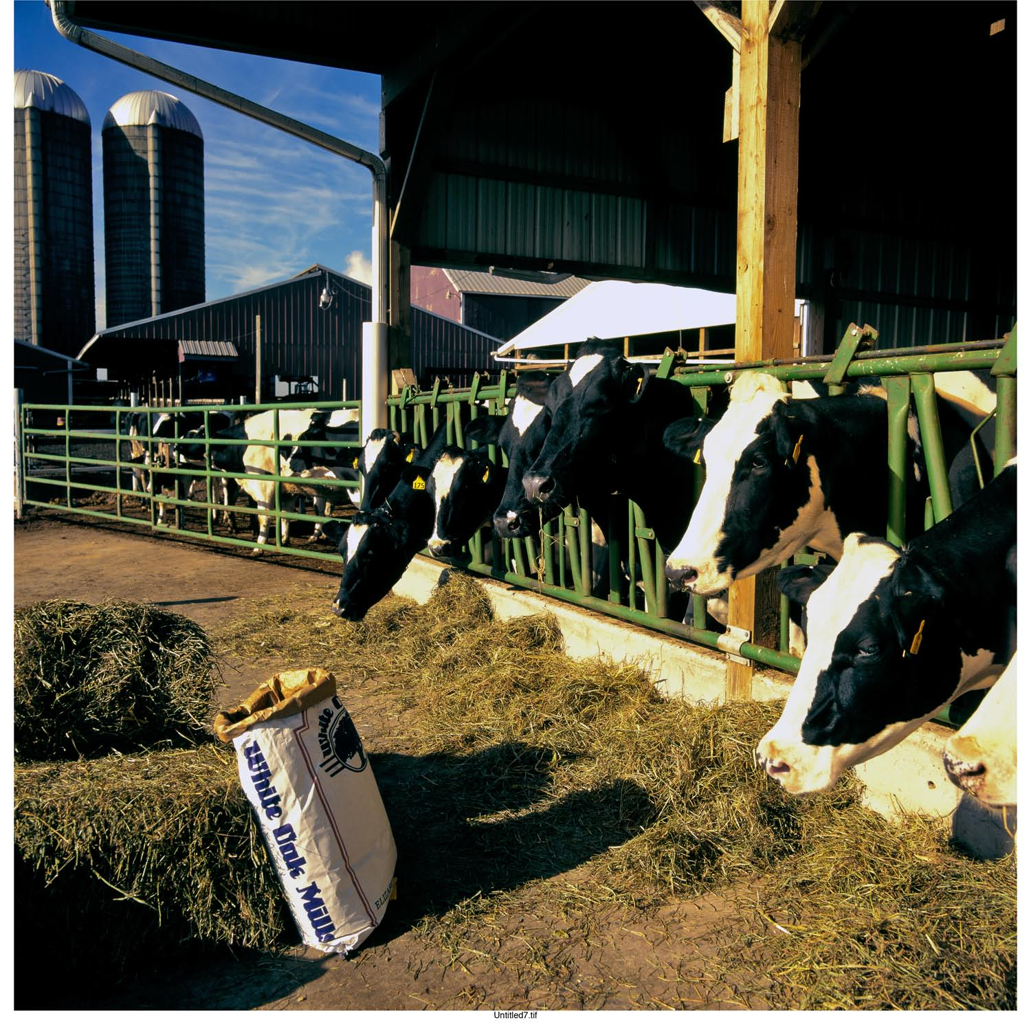 Milk Cow Feeds | White Oak Mills
